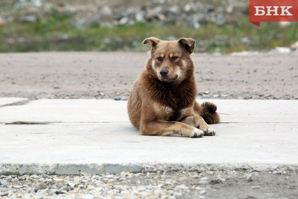 В Усинске укушенная бродячим псом женщина взыскала с мэрии 20 тысяч рублей